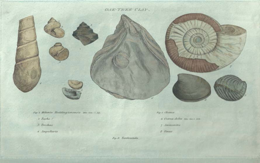 Strata Identified by Organized Fossils, containing Prints on Colored Paper of the most characteristic specimens in each Stratum by William Smith (1816-19). Examples shown are from the Oak Tree Clay, Kelloways Stone and Greensand